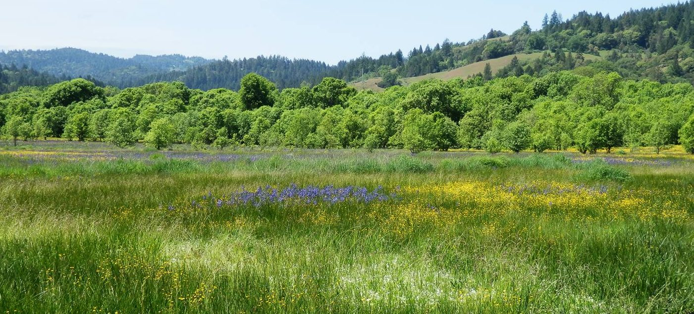 Willits_Little Lake Valley in bloom