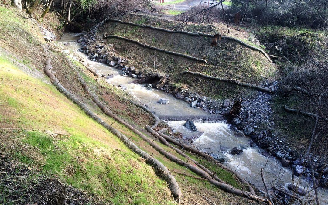 Denmark Creek Fish Barrier Removal and Riparian Habitat Enhancement