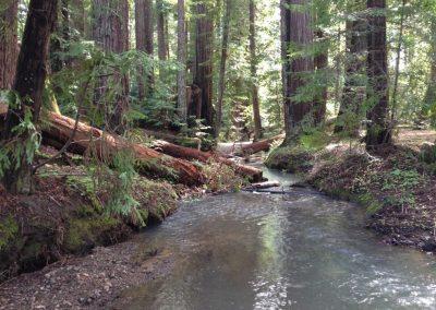 Neefus Gulch Coho Habitat Enhancement Project