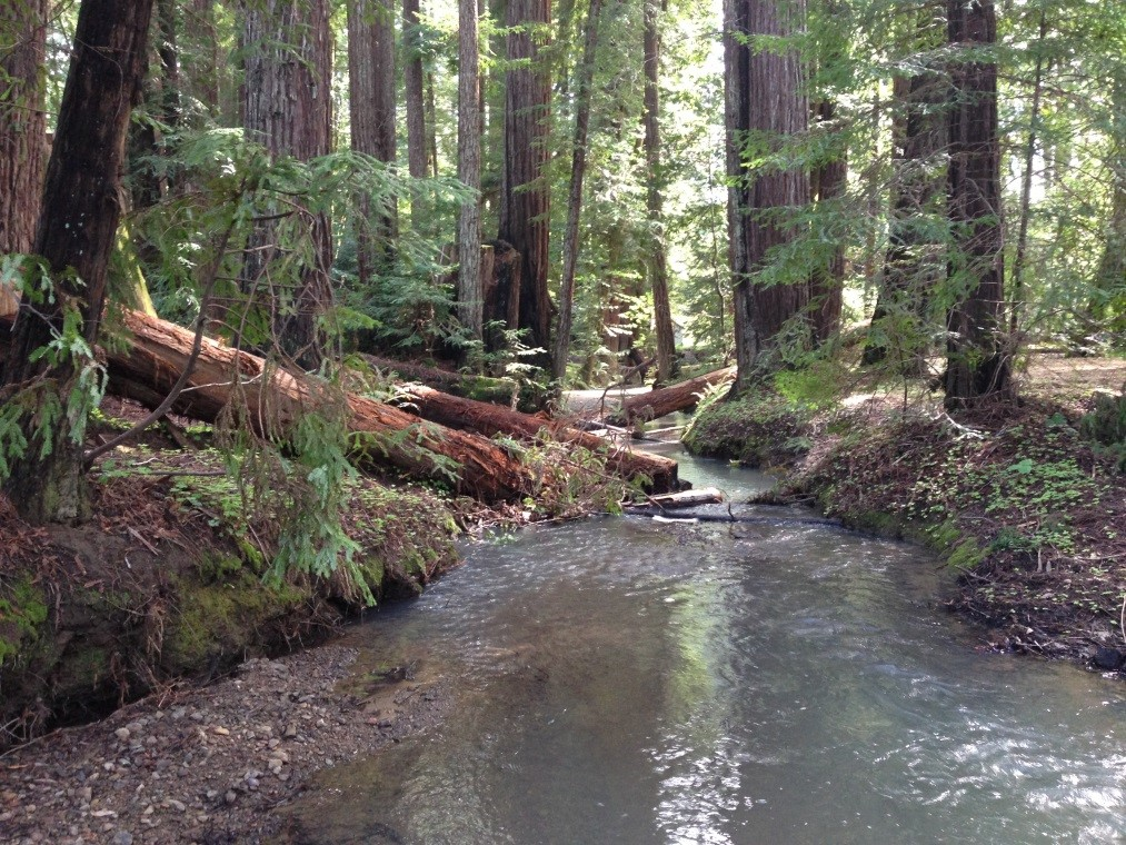 Neefus Gulch Coho Habitat Enhancement Project