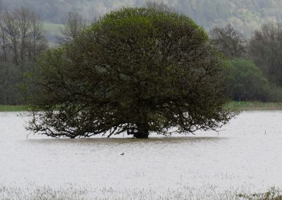 ash tree in the water