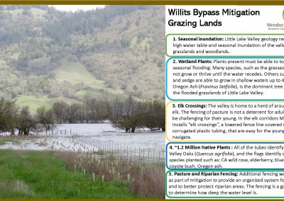 willits weekly image